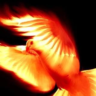 duhovnost duh sveti golubica vatrena