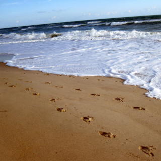 Footprints-in-the-Sand-Wallpaper-6